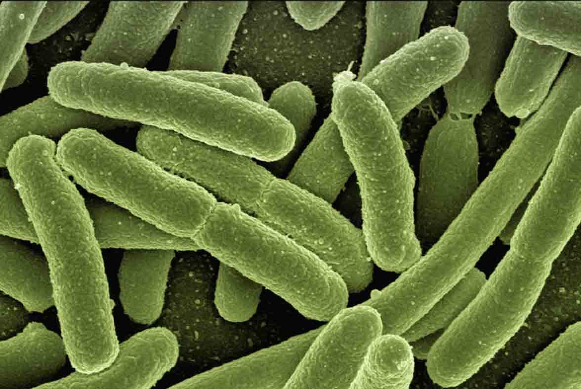 Eliminamos plagas agrícolas como la Xylella fastidiosa