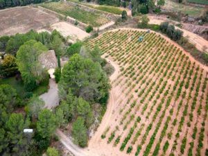 Imagen de zona de cultivo