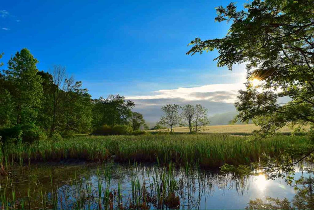 wetlands ideal environments for the proliferation of tiger mosquitoes