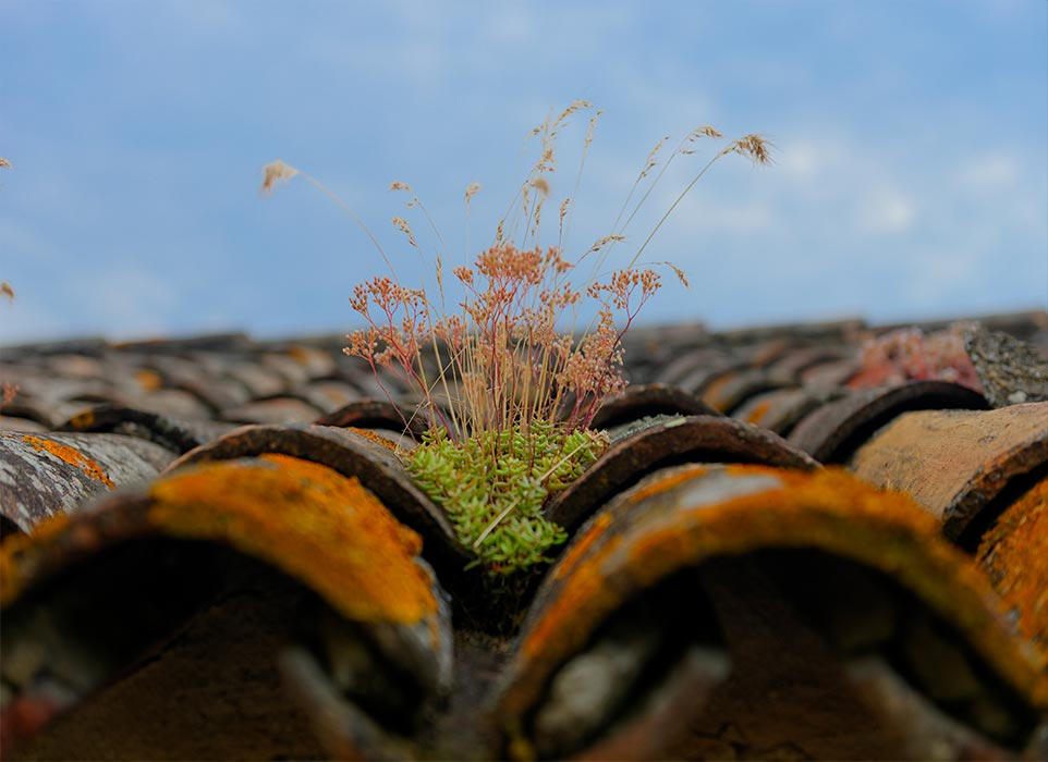 Image of weeds on rooftop