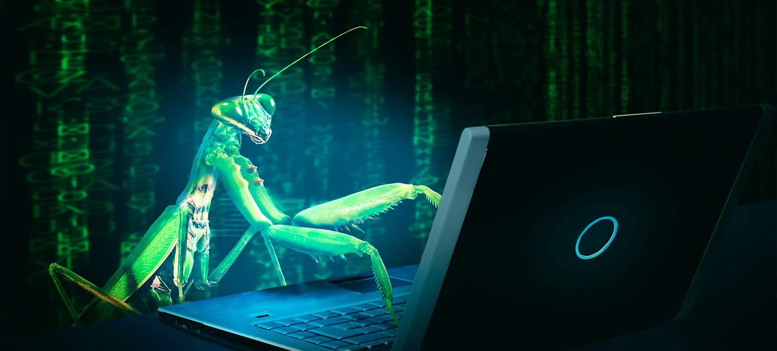 mantis sviluppa il sito Web che abbiamo lanciato in Fitostinger